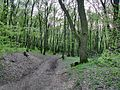 Forest - panoramio (23).jpg