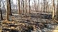 Forest Fire @ Wayanad Wildlife Sanctuary, Muthanga Range - panoramio (15).jpg