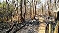 Forest Fire @ Wayanad Wildlife Sanctuary, Muthanga Range - panoramio (2).jpg