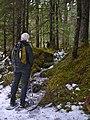 Forest Trail (13179635014).jpg