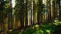 Forest at the foot of the mountain Seehorn.jpg