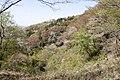 Forest in Mt.Takamine (Tochigi and Ibaraki) 01.jpg