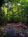 Forest near Tonga Lake.jpg