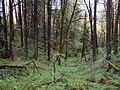 Forest park wildwood trail lazy bend P3861.jpeg