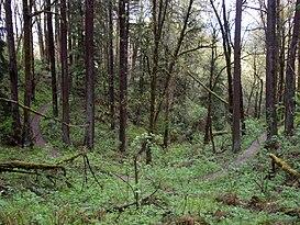 People Swalk–Forest 0054M rojo, Rojo (rojo), 44