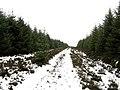 Forest road, Hen Toe Bog - geograph.org.uk - 336991.jpg