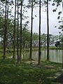Forest with pond.jpg