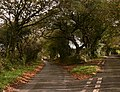Fork in the road near Pillaton - geograph.org.uk - 1029422.jpg