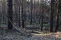 Forst Rundshorn IMG 3359.jpg