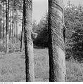 Fotothek df ps 0002267 Bäume.jpg