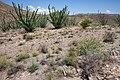 Fra Cristobal Range - Flickr - aspidoscelis (1).jpg