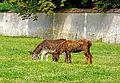 France-001673 - Donkey Park (15455495396).jpg