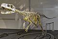 Frenguellisaurus ischigualastensis DSC 6185.jpg