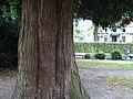Friedhof Materborn PM19-09.jpg