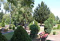 Friedhof Westerhäuser Straße (Quedlinburg).JPG