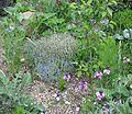Front garden - Flickr - peganum (7).jpg