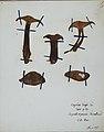 Fungi agaricus seriesI079.jpg