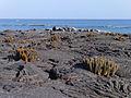 Galápagos Inseln, Ecuador (13899252426).jpg