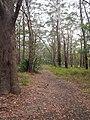 Garawarra Ridge - panoramio (3).jpg