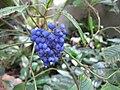 Gardenology-IMG 4866 hunt10mar.jpg