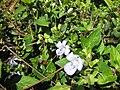 Gardenology-IMG 5032 hunt10mar.jpg