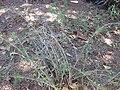 Gardenology.org-IMG 0420 rbgs10dec.jpg