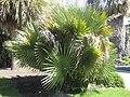 Gardenology.org-IMG 2122 hunt0903.jpg