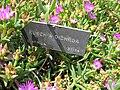 Gardenology.org-IMG 4223 hunt0904.jpg