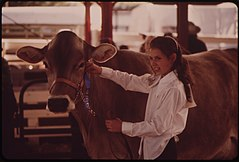 Garfield County Fair. Judging Livestock Raised by Youngsters in the 4-H Program, 09-1973 (3815845250).jpg
