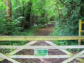 Lower Woods
