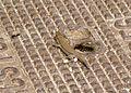 Gecko (2930041094).jpg