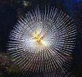 Genoa - aquarium 4.jpg