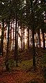 Geo-Naturpark Bergstraße-Odenwald Odenwälder Impressionen 03.jpg
