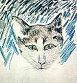 George Topîrceanu - Colored pencil drawing of a cat.jpg