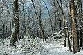 Golden Eagle Trail (Full Hike) (16) (11141999486).jpg