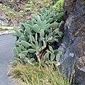 Gomera, Canary Islands. Гомера - panoramio (1).jpg