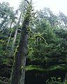 Grüner Wolkenkratzer.jpg