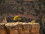 File:Grand Canyon, October 2008 (2985707932).jpg