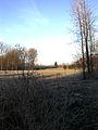Gratiebossen Winter 1.jpg