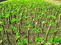Greenhouses in mahallat 14.jpg