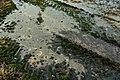 Grenctāles lidlauks 3.jpg