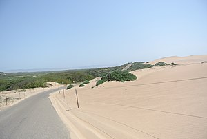Santa Barbara County, California - Transition zone (back dunes) in Guadalupe-Nipomo Dunes National Wildlife Refuge