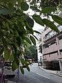 HK ML 香港半山區 Mid-levels 亞畢諾道 Arbuthnot Road buildings April 2020 SS2 09.jpg