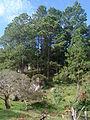 HN078sMarcs~Pine-Cove-.jpg