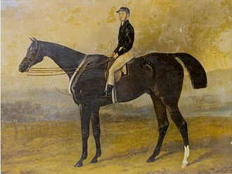 Half Caste (horse) - ″Half Caste with C. Green up″ (anonymous but possibly after Henry Barraud who painted Half Caste in 1859)
