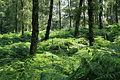 Haltern - Naturwildpark Granat 39 ies.jpg