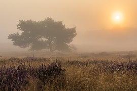 Haltern am See, Westruper Heide -- 2021 -- 4719-23.jpg