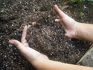 This is a picture of hands sifting through pot...