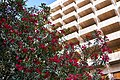 Hardy red Nerium Oleander on Voukourestiou Street in Athens.jpg