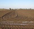 Harrowed field on Soham Fen - geograph.org.uk - 1651960.jpg